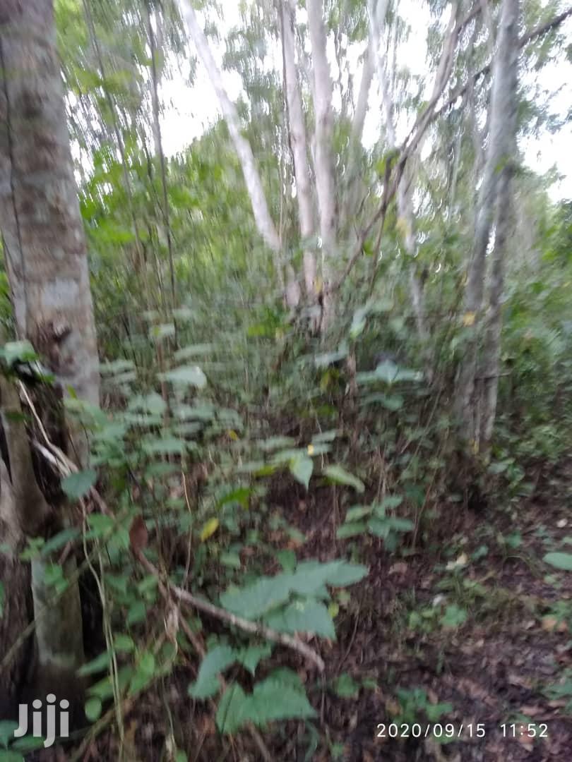 30 Acres Of Land For Sale At Nankese, Koforidua