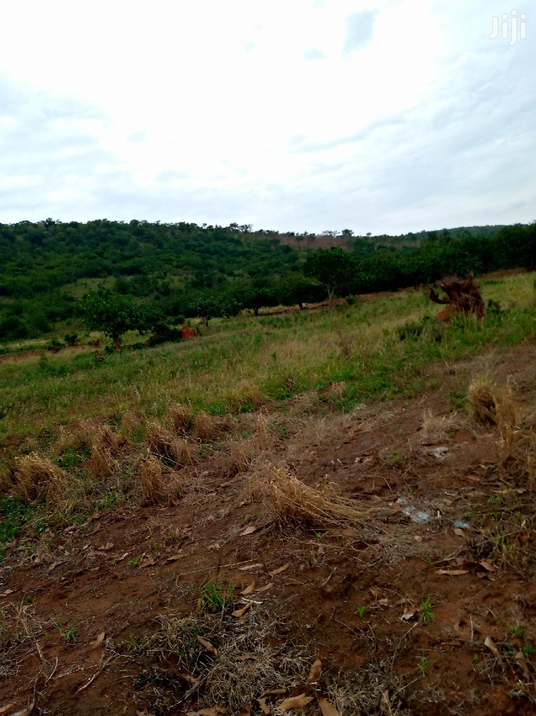Farmland for Sale   Land & Plots For Sale for sale in Akuapim North, Eastern Region, Ghana