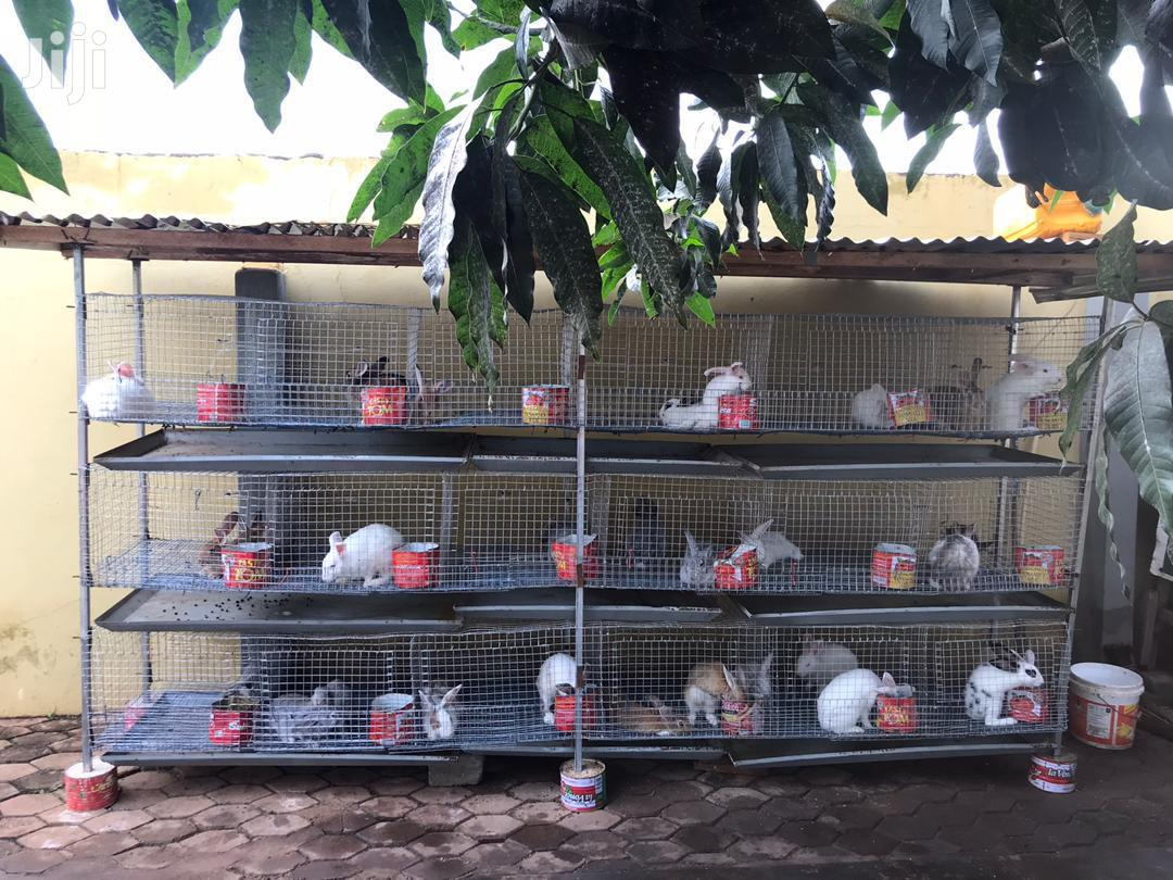 Rabbit And Grasscutter Cage For Sale | Farm Machinery & Equipment for sale in Adenta Municipal, Greater Accra, Ghana