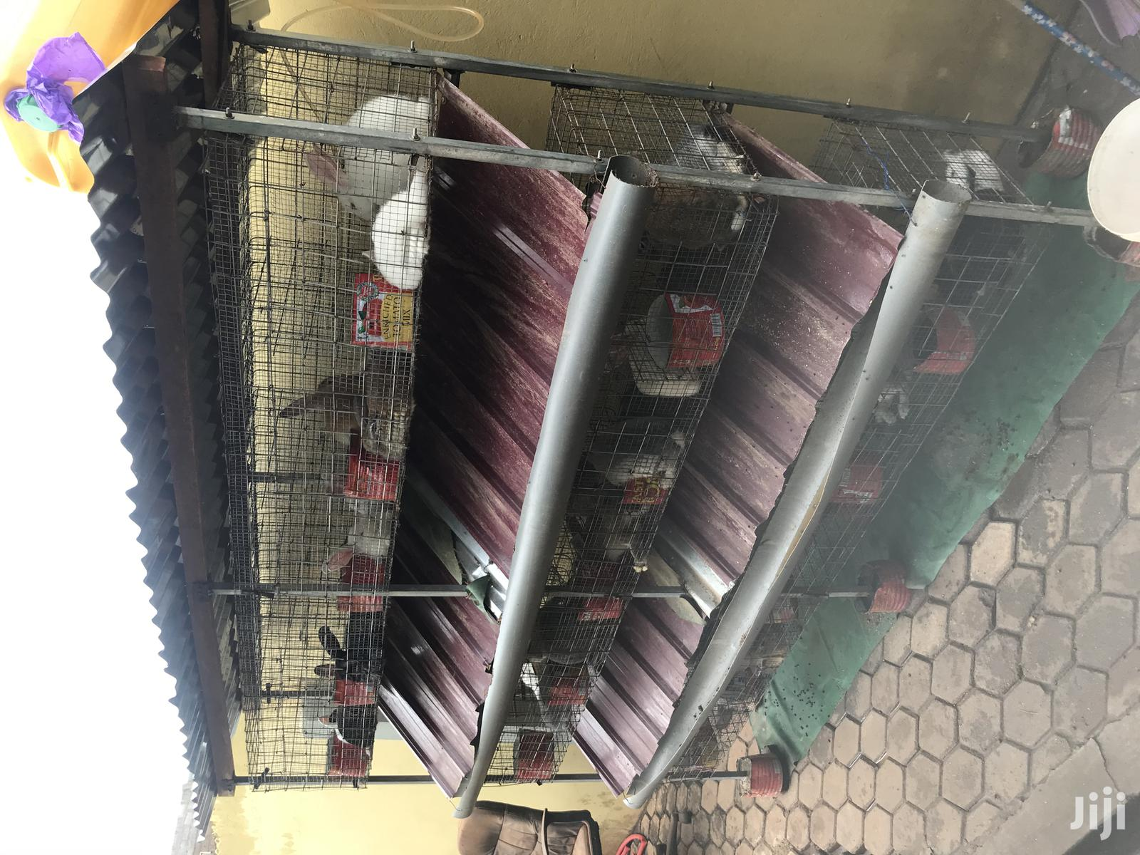Rabbits And Grasscutter Cage For Sale | Farm Machinery & Equipment for sale in Adenta Municipal, Greater Accra, Ghana