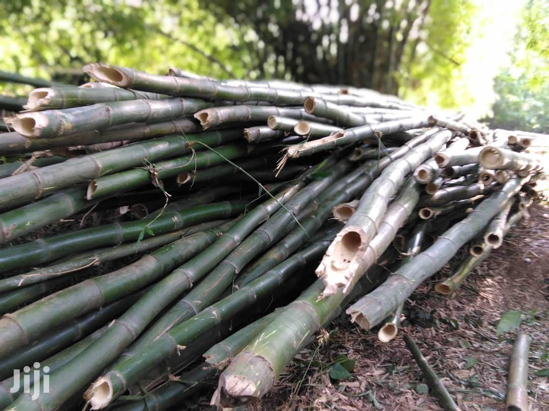Archive: Fresh Bamboo