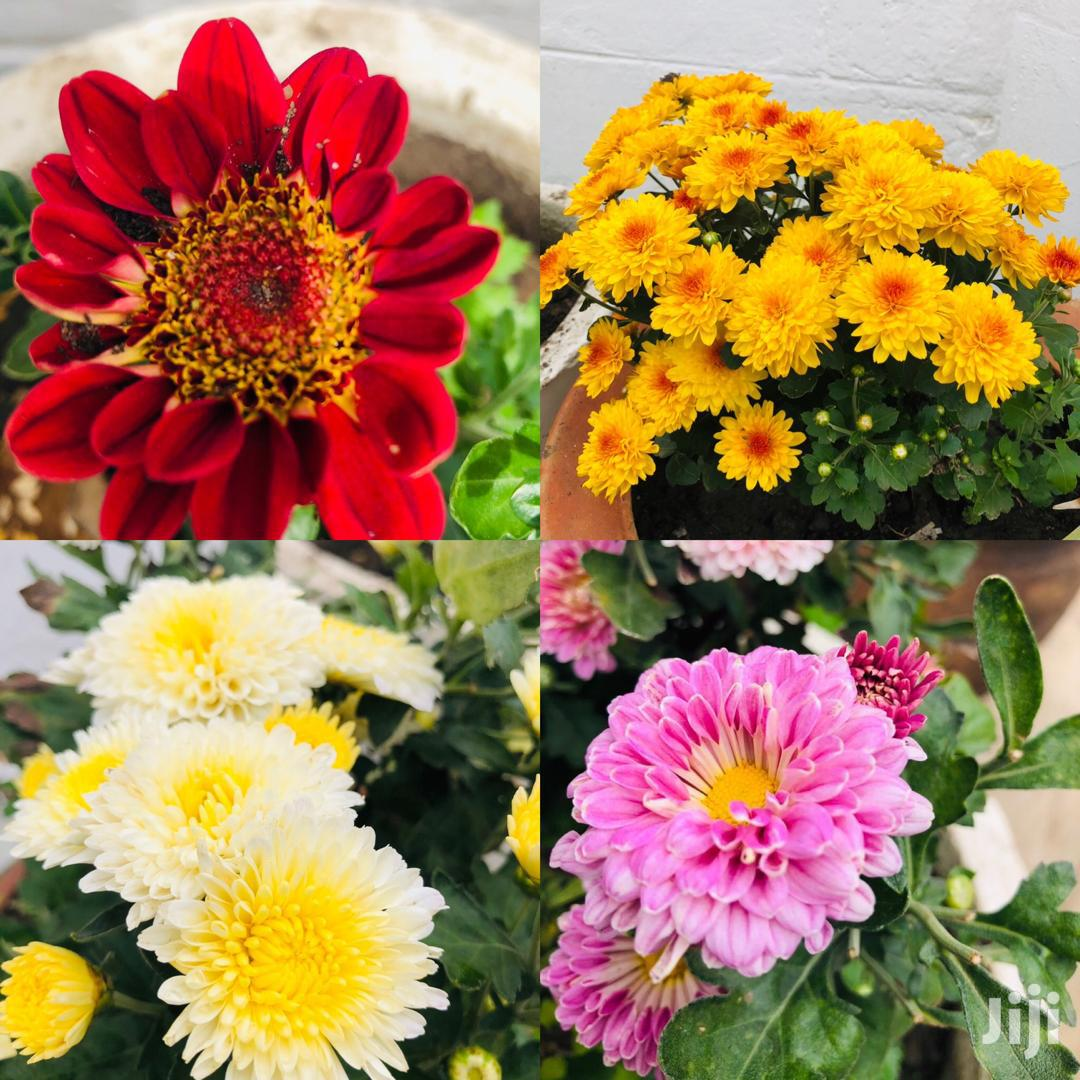 Blessed Home Floriculture