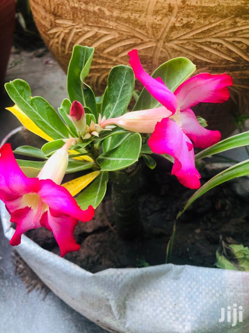 Blessed Home Floriculture | Feeds, Supplements & Seeds for sale in Burma Camp, Greater Accra, Ghana