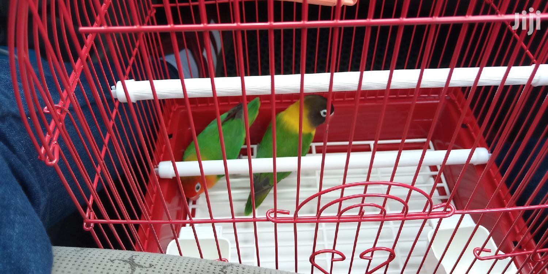 Max Small Finches Cage