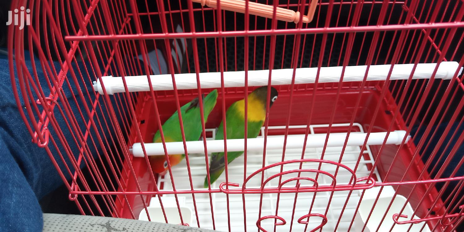 Max Small Finches Cage   Pet's Accessories for sale in Achimota, Greater Accra, Ghana