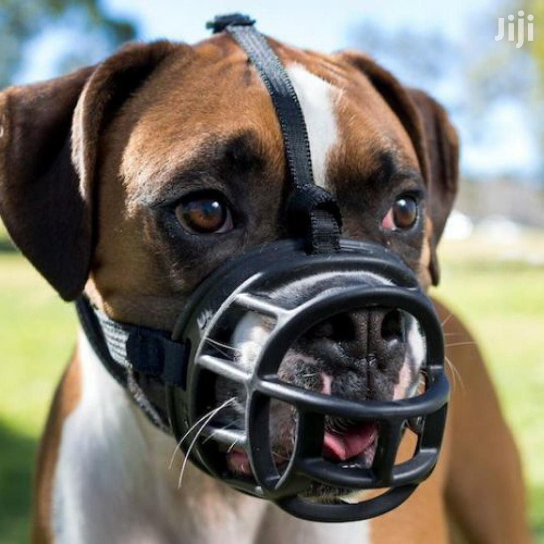 Plastic Dogs Muzzle   Pet's Accessories for sale in Kwashieman, Greater Accra, Ghana