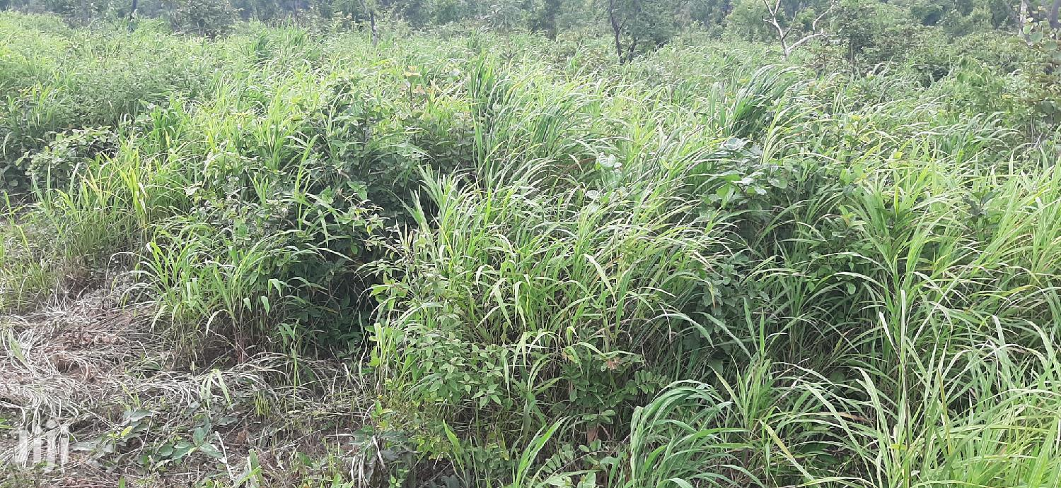 5,000acres Of Farmland For Sale | Land & Plots For Sale for sale in Banda, Brong Ahafo, Ghana