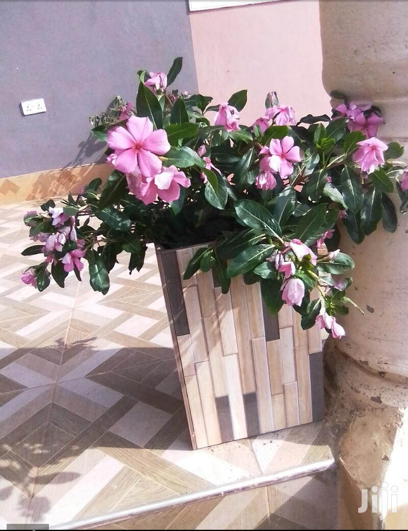 Archive: Flower Pot