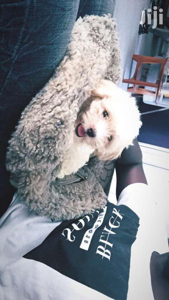 Archive: Poodle