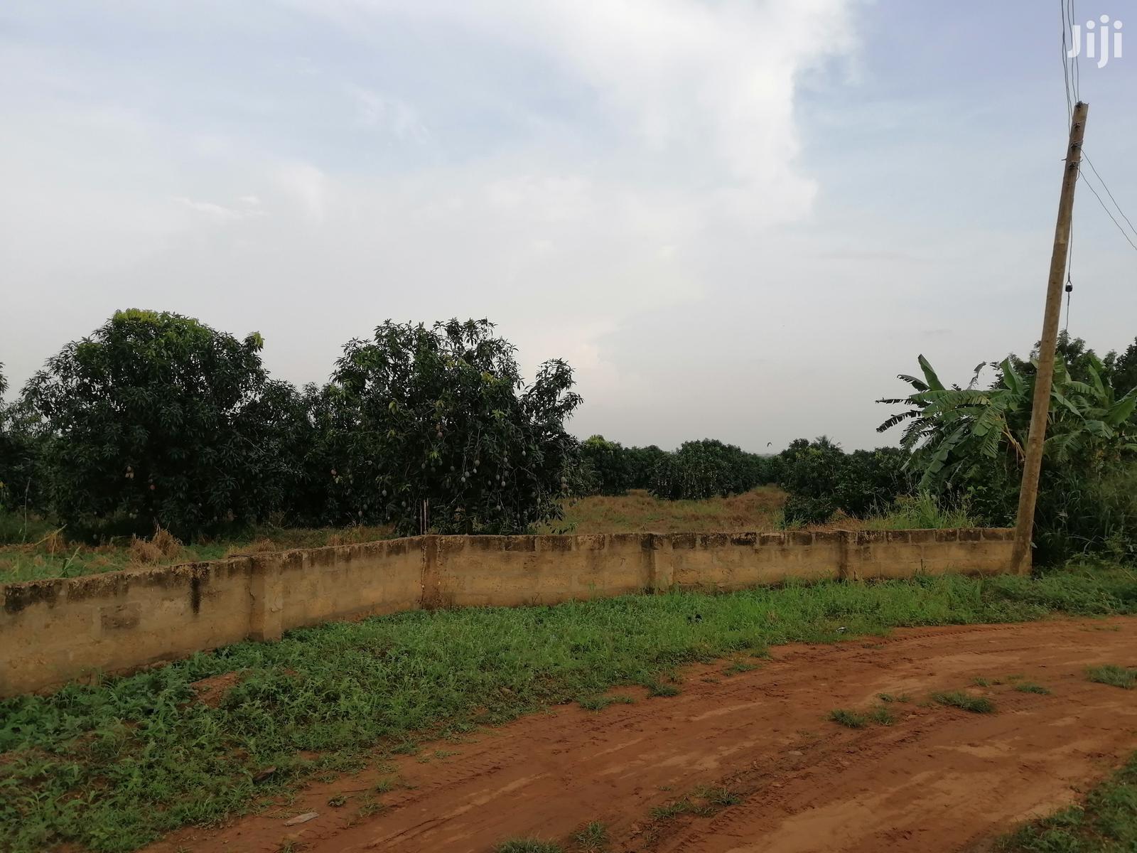 Archive: Five (5) Acres of Farm/Building Plots for Sale at Ayikuma