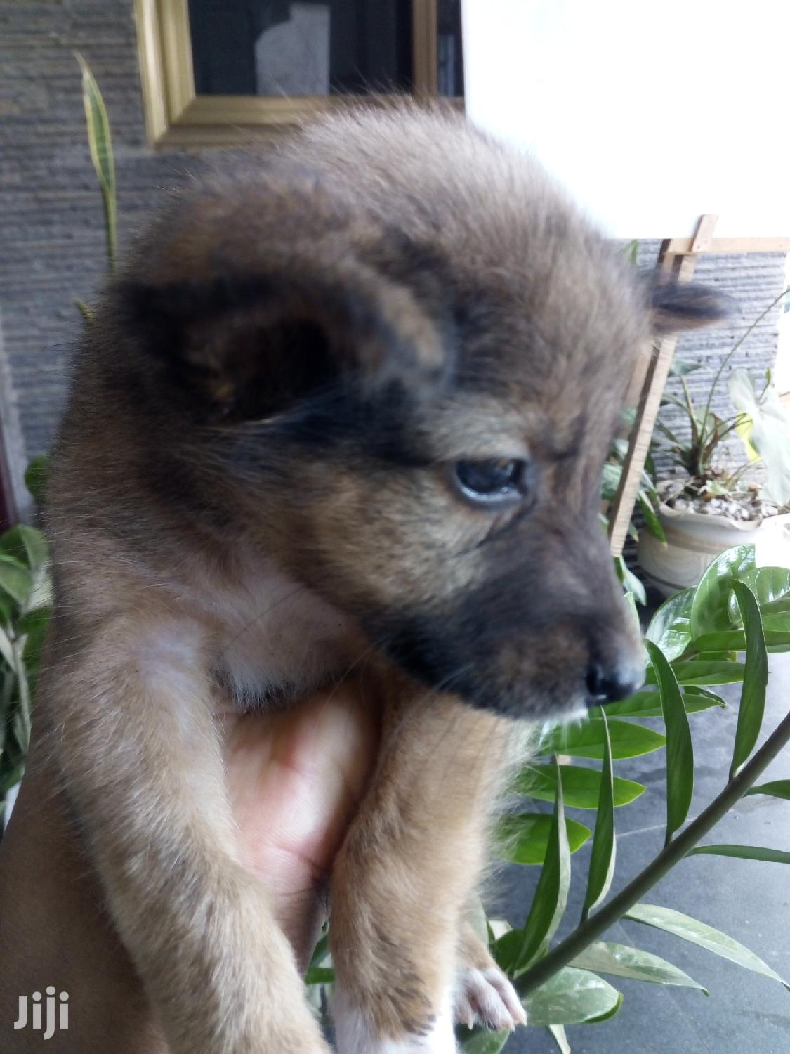 Archive: 1-3 month Male Mixed Breed Dog