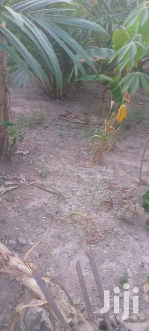Farmland on Sale   Land & Plots For Sale for sale in Ashanti, Ejisu-Juaben Municipal